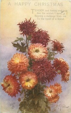 Cluster of bronze/rust colored chrysanthemums