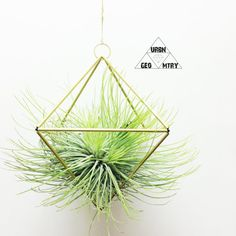 Listing is for ONE Geometric Planter Available in Brass , Copper or Aluminum    Airplant : Andreana    WATER: Misting or water but let dry out