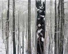 David Nadel: Burns ll  A solo show, 11 Color Photographs  January 16-March 10, 2013    Burn #124