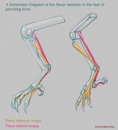 How do birds sleep standing on one leg?  
