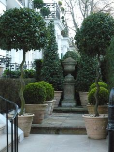 Beautiful topiary collection. Cone shaped in back, shorter rounded boxwoods most likely, and tall topiaries in front. Flanked by a hedge and centered with a stone urn/column. Wonderful!