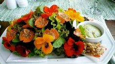 Every reason to grow, use and eat nasturtiums. Some culinary, some botanical!