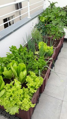 Balcony Container Vegetable Gardening Guide - Unique Balcony & Garden Decoration and Easy DIY Ideas Garden Garden apartment Garden ideas Garden small Balcony Herb Gardens, Small Balcony Garden, Indoor Garden, Outdoor Gardens, Easy Garden, Small Space Gardening, Garden Bed, Small Patio, Garden Planters