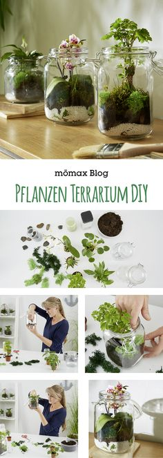 Plant the terrarium yourself – Garden plants – Beautiful Garden Types - Beautiful Garden Types Terrariums Diy, Terrarium Plants, Succulent Terrarium, Garden Types, Garden Care, Make Your Own, Make It Yourself, Garden Projects, Garden Pots
