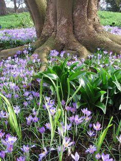 Spring in London, Kew Gardens, blue flowers