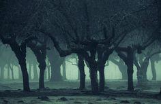 Ghostly Passage, Marymoor Park, Redmond, Washington