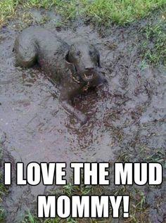 This pup definitely needs a bath! #SplashPet www.vetsplash.com