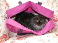 Cat in the bag..