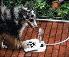 The Doggie Fountain is a cool solution for keeping your dogs water supply safe