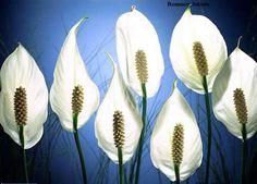 Fotos de flores bonitas