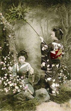 Firefly Hunt 1900