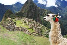Perú tiene medicinas complementarias en su seguridad social ...