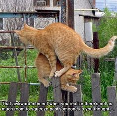 funny, funny pictures, funny photos, funny animals, dog, cat, funny cats, funny dogs, cute, hilarious, 15 Hilarious Awkward Animal Moments