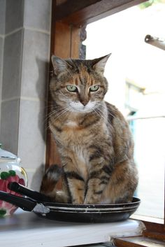 Out of the frying pan!!!  cat
