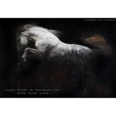 Tony O'Connor Equine Art whitetreestudio.ie 'The Tempest' Every Storm is temporary and we are never alone. Prints available