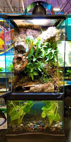 DIY Paludarium with aquarium on bottom and terrarium on top. Great for dart frogs, day geckos, cherry shrimp, and more! Lizard Terrarium, Fish Tank Terrarium, Large Terrarium, Terrarium Diy, Chameleon Terrarium, Orchid Terrarium, Terrarium Centerpiece, Hanging Terrarium, Aquarium Setup