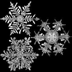 Microscopic Snow Zoom | Microscopics
