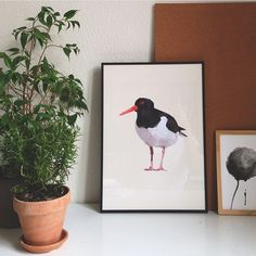 Get the oystercatcher poster at my shop. Link in bio ⬆️ #oystercatcher #tjaldur #strandskade #bird #illustration #poster #plakat #print #art #geometricart #geometric #polygonic #polyart #nordic #wallart #minimalistic #simple #home #decor #interior #indretning #interiør #design #etsy #etsyshop #nordster
