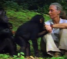 Image result for jane goodall when she was little she a humanitarian