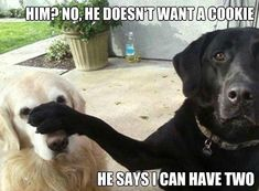 :)  My dogs' thoughts for sure when I'm giving them treats