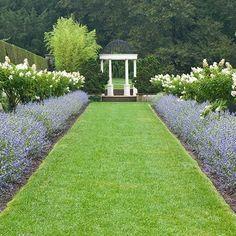 17 Best Hydrangeas Images Hydrangea Plants Hydrangea