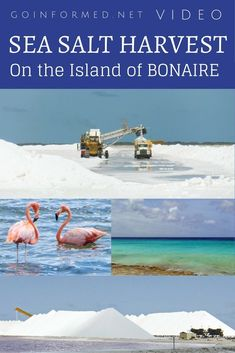 Unbelievable video of a sea salt harvest operation on the Caribbean island of Bonaire. Check out these big machines!