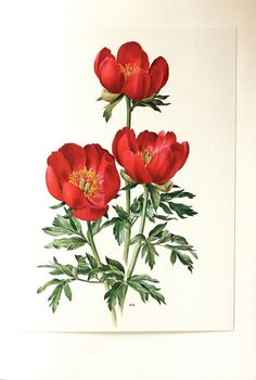1972 Red peony art vintage peony print  French by annelondez1, $9.90