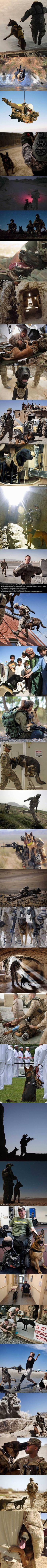 Cry 'Havoc!', and let slip the dogs of war