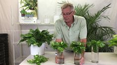 Are you thinking of starting your own hydroponics garden? When it comes to DIY hydroponics, you can afford to choose between very simple techniques and complex ones. Hydroponic Farming, Hydroponic Growing, Aquaponics Fish, Growing Plants, Hydroponics, Aquaponics System, Ivy Plants, Indoor Plants, Succulents Garden