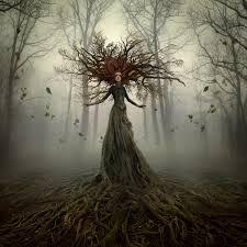 Afbeeldingsresultaat voor woodland pixie tree bark