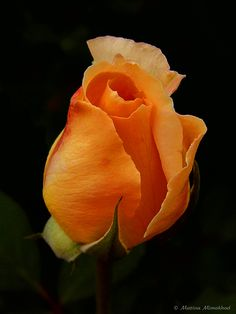 Rosa / Rose    http://vijaytamil.org/2012/10/saravanan-meenakshi-11-10-12-saravanan-meenakshi-serial-online-11-10-12-vijay-tv-saravanan-meenakshi-11-10-12-watch-online-saravanan-meenakshi-ser-today-11-10-12-saravanan-meenakshi-11th-october-2/