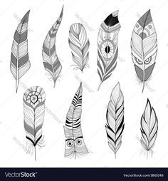 Set of feathers. Download a Free Preview or High Quality Adobe Illustrator Ai, EPS, PDF and High Resolution JPEG versions.