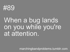 when that bug is a bee...