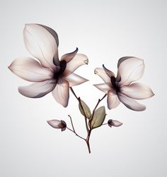 Orchid Flower Vector - Free Vector Site | Download Free Vector Art, Graphics
