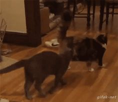 These GIFs are busting out some sweet new moves.