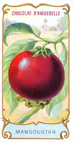 Botanical - Fruit - Mangosteen (2)