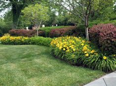 Low maintenance landscape--maroon shrub and rebloooming yellow daylily. I would refresh the look by using a newer daylily like 'Going Bananas'