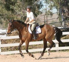 Teaching a green horse his leads isn't easy. Here are some tips to help.