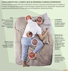 Los ladrones del buen dormir | Adolescentes, Argentinos, Cerebro, Ciencia, hábitos, InfobaeTV, Medicina, Memoria, salud, Tecnología, Trastornos del sueño - Infobae