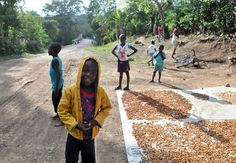 Drying cocoa seeds in Milot, Haiti - near Hôpital Sacré Coeur  Photo by: Nate MacFarland
