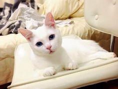 gato-setsu-beleza-3