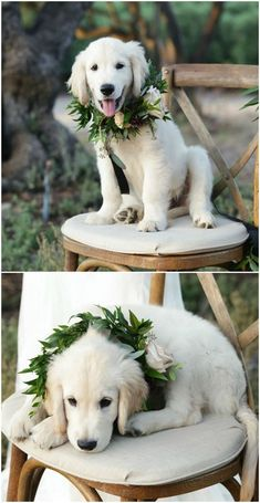 This golden retriever puppy looks dapper in a greenery collar wreath // Kimberlee Miller Photography