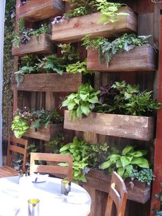 plants on a wall, box wall, flowers, flower boxes