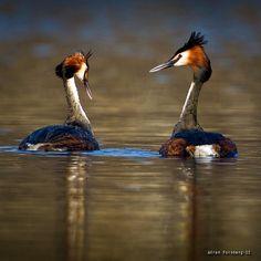.@Göran Forsberg | #feather_perfection #most_deserving #mafia_naturelover #magnificent_shots
