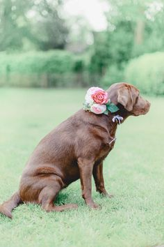 Dog Friendly Wedding Inspiration by Kiss from Fleur Event Styling | Pretty…