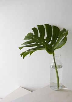 WEEKDAYCARNIVAL : Sunny mornings - beautiful Monstera plant leaf in a glass bottle - simple and beautiful
