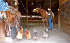 It's always nice to have an audience when you are grooming your horse!