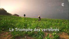 Le triomphe des vertébrés - http://cpasbien.pl/le-triomphe-des-vertebres/