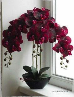 Gorgeous Orchid Arrangements Ideas To Enhanced Your Home Beauty 16 Orchids are one of the most beautiful flowers. People have searched the world to find the rarest and most spectacular … Orchids Garden, Orchid Plants, Exotic Plants, Exotic Flowers, Garden Plants, House Plants, Flowers Garden, Most Beautiful Flowers, Pretty Flowers