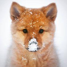 Ещё чуть чуть и зима...)  Зима на носу  https://da-info.pro/stream/ese-cut-cut-i-zima